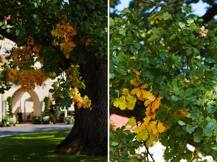 drzewo dubieck zamek